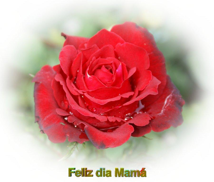 Rosas hermosas todo en goma eva - Rosas rosas hermosas ...