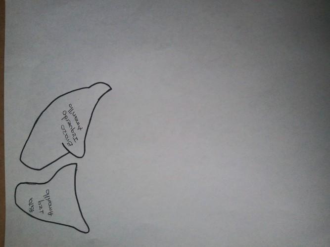 fuleco-la-mascota-del-mundial-2